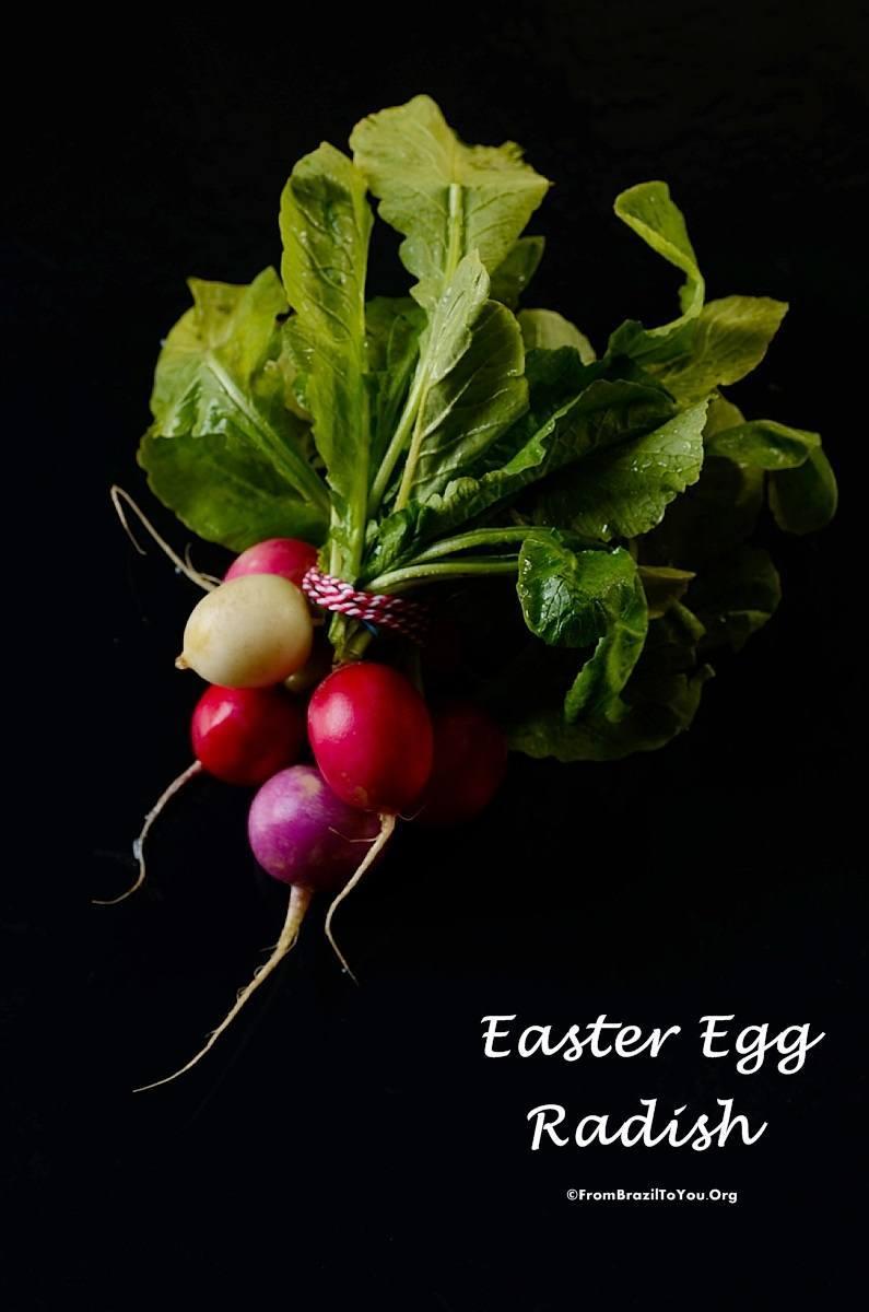 Easter egg radish by Denise Browning