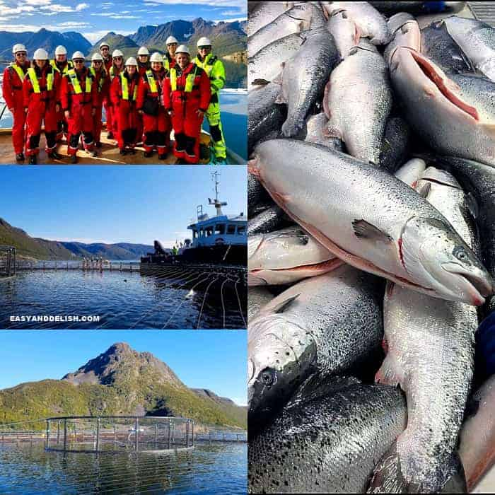 image collage of fishing trip to Alta, Norway
